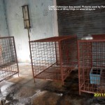 Some cages are crammed with dogs, others absolutely empty!