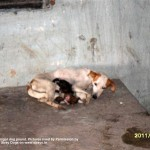 The mother who littered at the pound, without food or water