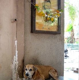 """Rani"" the 15 yr old resident of the Bhikaji Behram Kua (Parsi Well)"