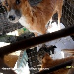 Starving mothers and pups dying of disease