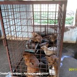 Crammed dogs at GHMC, waiting to die a slow terrible death