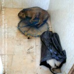 A dead dog and a CNVR dog lying in the same kennel while many others were empty (still in net without food and water)
