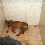 Another dog kept in the net overnight - without food or water - II