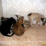 5 pups captured for ABC and kept without food and water for 2 days