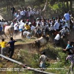 Jalikattu on The Voice of Stray Dogs