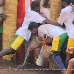 Cruelty Stage 3: Arena:  Alanganallur: Matadors' jumping on the bull even before the bull enters the arena