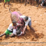 Cruelty Stage 3: Arena: Alanganallur: Bulls head thrashed on the floor