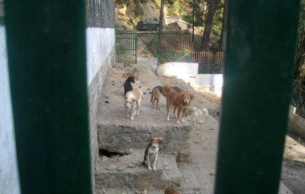 This is when the dogs had come into the Shimla dog pound I