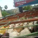 Transportation of cows and calves for slaughter into West Bengal is common from across Indian states. This is an account by Rajdeep Datta Roy from Bihar and West Bengal