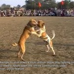 Dog fight in the Punjab