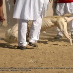 Dog fight in Gumti Kalan in rural Punjab
