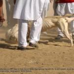 Dog fight in Gumti Kalan in rural Punjab