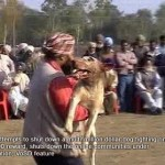 Dog being brought into a fight in rural Punjab