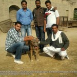 Dog fighers posing with their dog in the Guru Hasahai village in rural Punjab