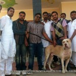 Fighter dog with owner and friends