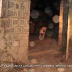 Dogs of Srinagar, Kashmir: Rainawari graveyard II