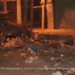 Dogs of Srinagar, Kashmir: Khaiyyam Chowk II