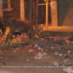Dogs of Srinagar, Kashmir: Khaiyyam Chowk III