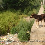 Dogs of Srinagar, Kashmir: Open garbage at Bandh Road, Shivpora, Uptown - II