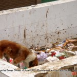 Dogs of Srinagar, Kashmir: Open garbage at Bandh Road, Shivpora, Uptown - I