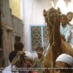 Camel I the day before the sacrifice IV