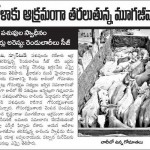 Cows illegally transported for slaughter, now at SPCA Kakinada.(AP, India): Illegal slaughter in India. Pictures © Animal Rescue Org. Kakinada. Used with permission by 'The Voice of Stray dogs' (www.strays.in)