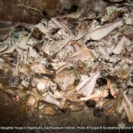 The leftovers kept in slaughter house in a durty condition