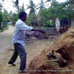 100+ dogs killed in East Godavary District